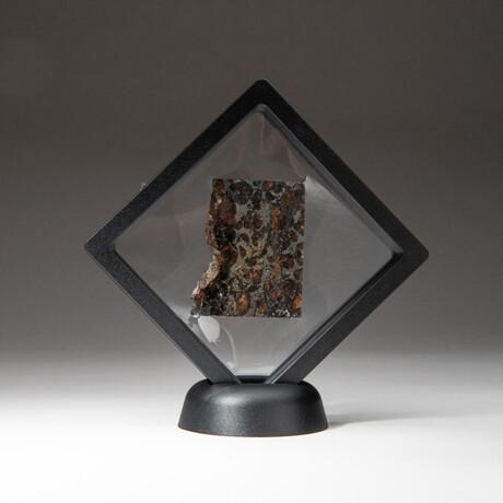 Genuine Seymchan Pallasite Meteorite Slice + Display Box // 23 g // V1