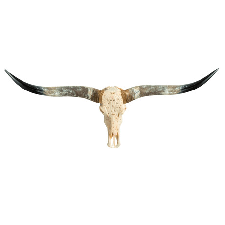 Carved Horns Longhorn Skull // Feathers