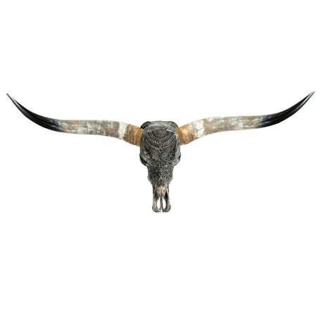 Carved Longhorn Skull // Gray Boho