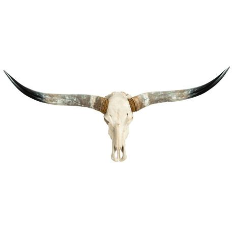 Longhorn Skull // White Storm