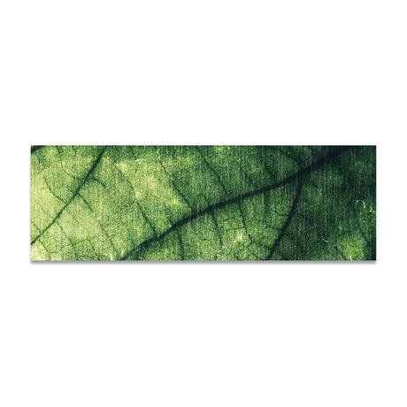 """Plant Texture 2 (16""""H x 48""""W x 0.5""""D)"""