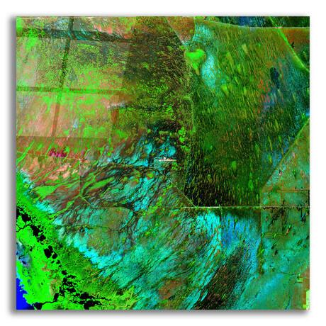 "Everglades (12""H x 12""W x 0.13""D)"