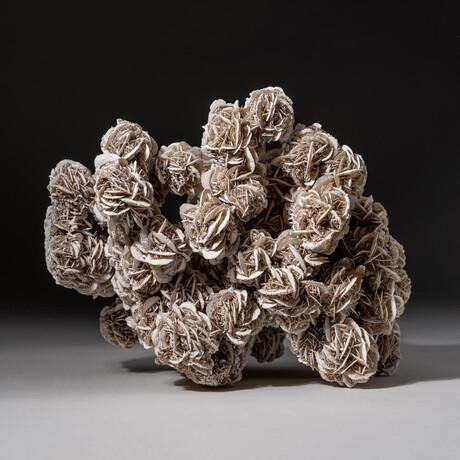 Genuine Natural Desert Rose Selenite Cluster