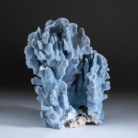 Genuine Blue Ridge Coral