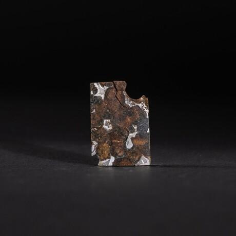 Genuine Seymchan Pallasite Meteorite Slice + Display Box // 4.9 g