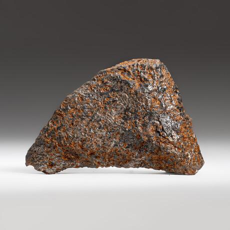 Genuine Natural Canyon Diablo Meteorite + Display Box // 170 g