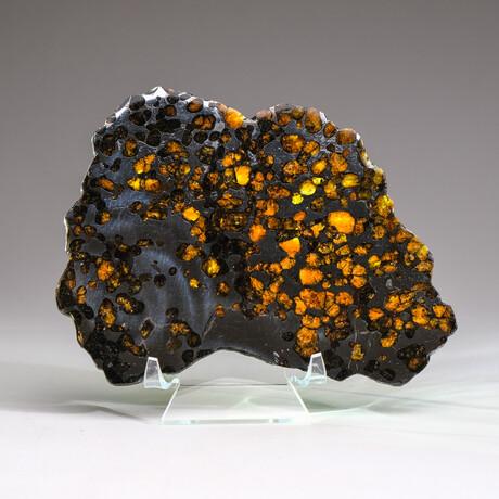 Genuine Natural Seymchan Pallasite Meteorite Slice + Acrylic Display Stand // 225 g