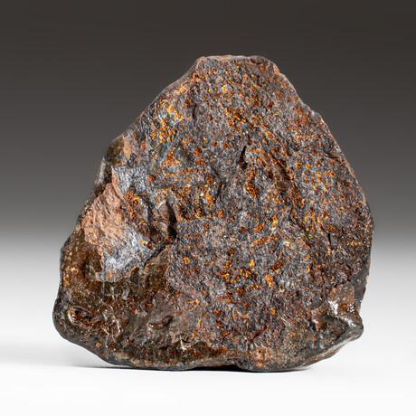 Genuine Natural Canyon Diablo Meteorite + Display Box // 75 g