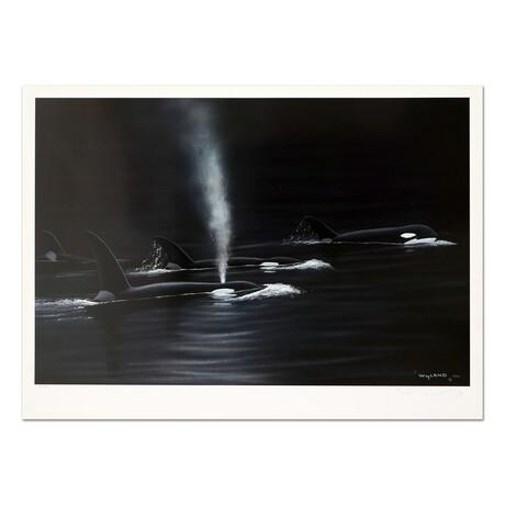 Ancient Orca Seas