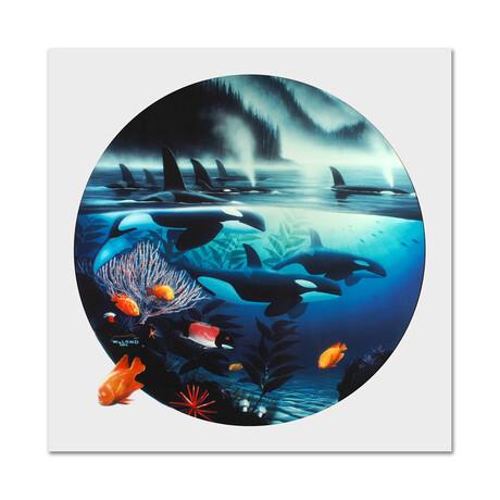 Orca Journey