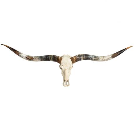 Longhorn Skull // XL Horns // White Storm