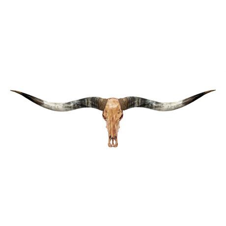 Longhorn Skull // XL Horns // Antique Storm