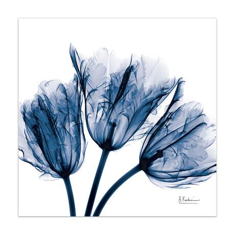 Blue Tulip X-Ray