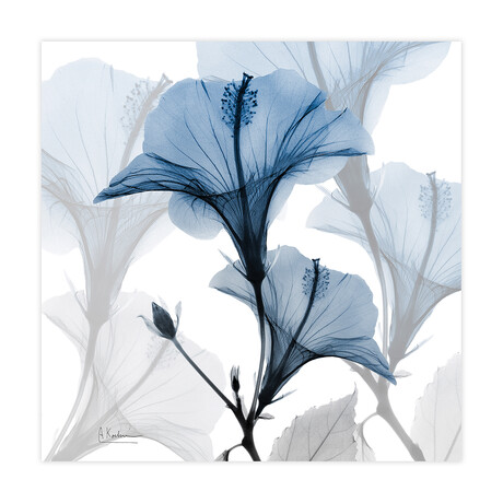 Blue X-Ray Floral