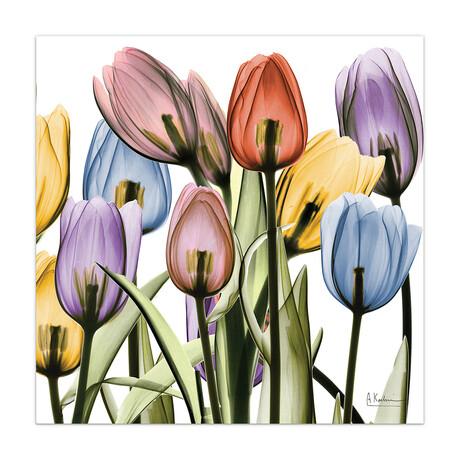 Tulip Scape X-Ray II