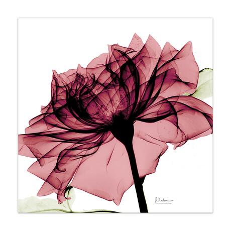 Chianti Rose I