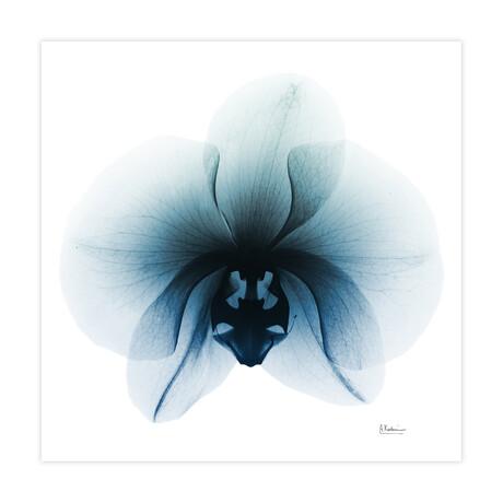 Glacial Orchid