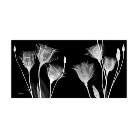 Gentian X-Ray