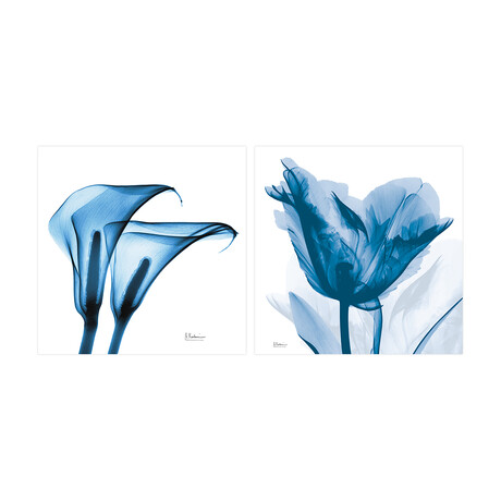 Blue Tulip & Lililes // Set of 2