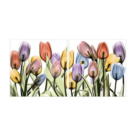 Tulip Scape X-Ray I + II // Set of 2