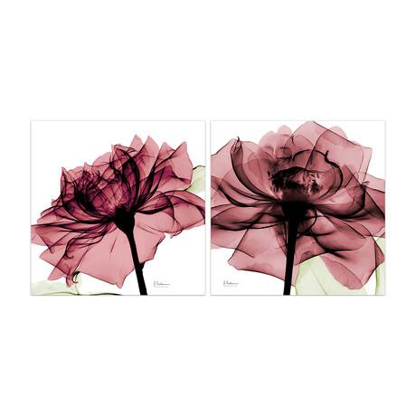 Chianti Rose I + II // Set of 2
