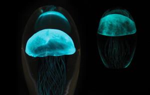 Glowing Glass Jellyfish Displays