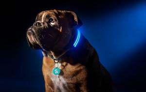 Light-Up Pet Collars