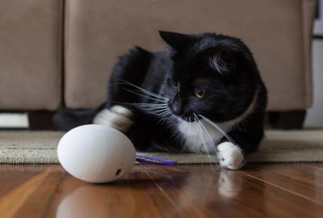 The Cat Companion