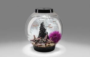 The Hybrid Desktop Aquarium