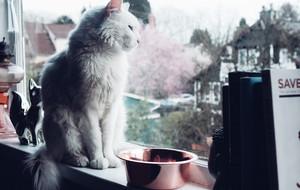 Silver + Copper Antibacterial Pet Bowls