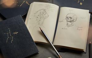 Constellation Notebooks