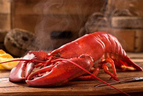 Live + Frozen Maine Lobster