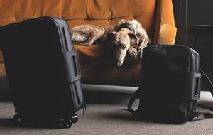 Intelligent Italian Cabin Luggage