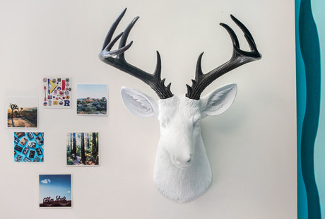 Animal-Friendly Taxidermy