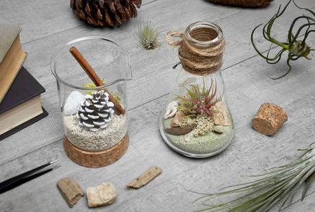 Terrarium & Vegetable Kits