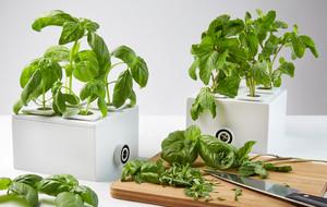 Spring Has Sprung - Indoor Grow Kit