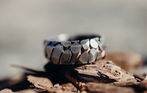 Exotic Men's Rings