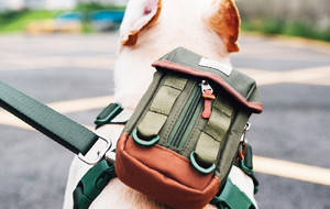 Innovative Canine Accessories