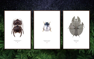 Star Wars Meets Entomology