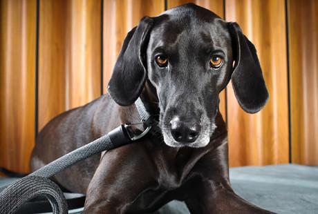 Advanced Dog Collars & Leashes