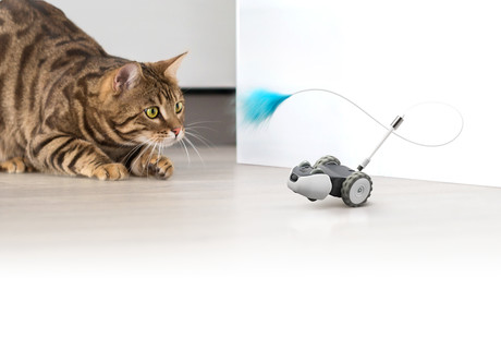 The Mousr Robotic Cat Toy