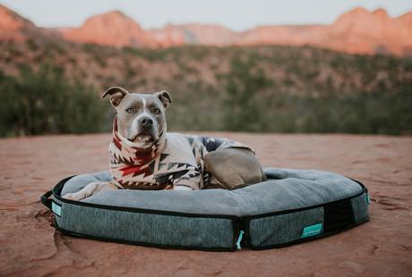 The Smartest Travel Dog Bed