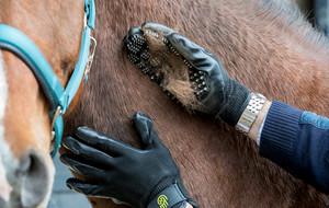 Award-Winning Grooming Gloves