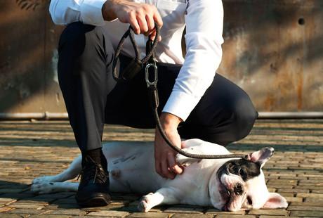 Modular Dog Leashes