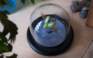 Insect Lab