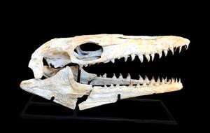 Fossil Shack
